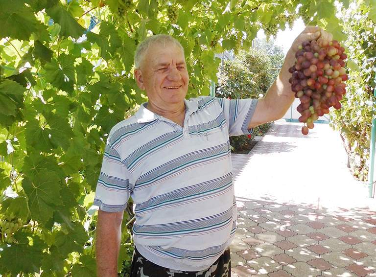 Михаил Дедиков  демонстрирует гроздь винограда, который  на Кубани расти  не должен, но растёт  и плодоносит