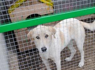 Открытие приюта для бездомных животных